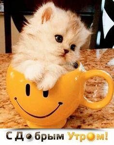 Funny Animals, Cute Animals, Kittens Cutest, Good Morning, Warm, Children, Brunette Beauty, Hugs, Kisses