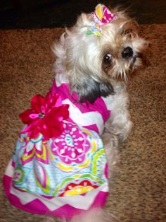 Miss priss in her southern puppy boutique dress