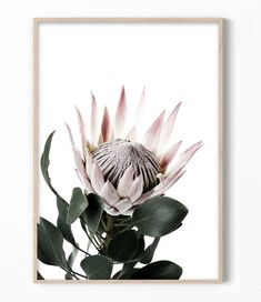 King Protea Art Print by Little Ink Empire. Protea Art, Protea Flower, Flower Wall, Flower Prints, King Protea, Botanical Prints, Artwork Prints, Poster Prints, Pink Flowers