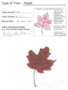 Favorite fall activity - leaf collectors album template. Has pages for several common trees, so you can collect leaves, bring them home, and learn about the tree they came from while making this book.