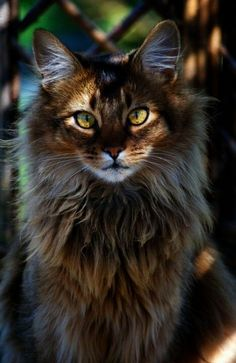 Now that's trendy... Beautiful Cats Pics Download!!