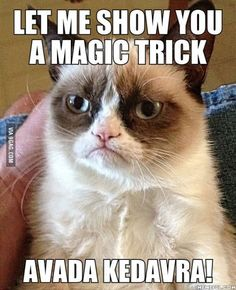 Grumpy Cat - Harry Potter - Let me show you a magic trick. Avada Kedavra