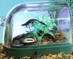 Crab Habitat the Underwater Oasis perfect for fiddler crabs and hermit crabs and you name it!