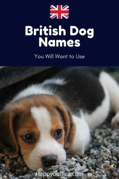 Giving your pup a British name can be fun, but not every British name is going to work for your dog. Check out our list of 550 British dog names that work. (#Dognames, #Britishdognames, #Namesforapuppy, #femaledognames, #maledognames) British Names, Animals And Pets, Cute Animals, National Geographic Animals, Food Dog, Wild Animals Pictures, Dog Items, Dog Hacks, Dog Training Tips