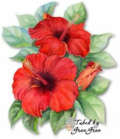 Shop Red Hibiscus Tropical Flower Painting - Multi Postcard created by JUDERM. Flower Images, Flower Art, Botanical Illustration, Botanical Prints, Fabric Painting, Painting & Drawing, Watercolor Flowers, Watercolor Paintings, Decoupage