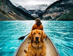 From @AnmlsWorld Pets Vacation Too !!! Banff National Park Canada. Photo by @hunter_lawrence | #AnmlsWorld | by placeswow