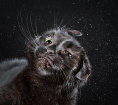 chat-secoue-05 - La boite verte