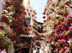 "These photos are taken on ""The Street of Flowers"" in Cordoba, Spain. I guess it isn't possible to have too many flowers."