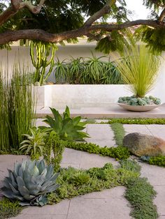 Staking out their territory: borders of succulents which include agave parryi and agave attenuata make a plain patio interesting! Back Gardens, Small Gardens, Plant Design, Garden Design, Agave Attenuata, Full Sun Plants, Planting Plan, Garden Posts, Gardening Magazines