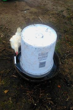 DIY automatic chicken waterer with chick<br> Time to make a DIY automatic chicken waterer and reduce the amount of time you spend on barn chores. Make an automatic chicken waterer in just a few easy steps! Chicken Watering System, Chicken Water Feeder, Chicken Feeders, Water Feeder For Chickens, Chicken Cages, Chicken Toys, Chicken Humor, Chicken Houses, Chicken Treats