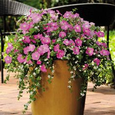 Container Gardening Add a planter of Shock Wave Rose Pelleted Petunia for a punch of pink in your flower container garden- What brilliant color! Container Flowers, Flower Planters, Container Plants, Container Gardening, Flower Pots, Flower Seeds, Succulent Containers, Vegetable Gardening, Outdoor Flowers