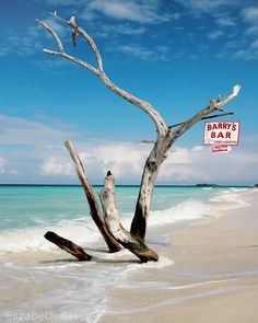 You never know, from trip to trip, if this tree will be beached or in the water. Depends on how mother nature has distributed the sand. Jamaica Pictures, My Happy Place, Travel Pictures, Driftwood, Mother Nature, Places Ive Been, Travel Inspiration, Summertime, Negril Jamaica