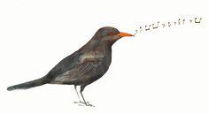 Merla by Vanesa Freixa #illustration #ilustracion #bird #mirlo #watercolor #pencil