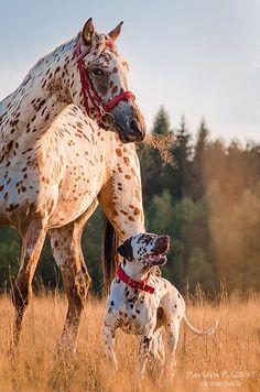 scarlettjane22:  Nadia and Thission Author:Polina Pavlova http://www.equestrian.ru/