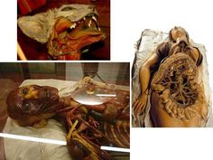 La Specola. Florence, Italy. 1775, most famous anatomical wax museum.