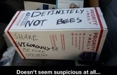 Well at least its not bees - funny, bees. New Memes, Funny Memes, Hilarious, Jokes, It's Funny, Funny Quotes, Aaliyah, Donald Trump, Charlie Kelly