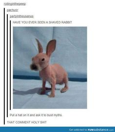 Shaved rabbit