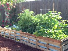 Pallet Garden With Tomatoes, Squash, Cucumbers And Peppers.