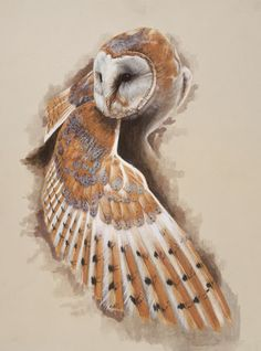 Owl tattoo. Don't like color, love idea of down-stretched wing for a shoulder cap.