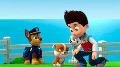 щенячий патруль мультфильм  - Щенячий Патруль Щенки Встречают Крепыша