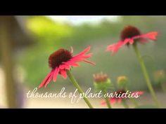 Rotary Botanical Gardens -