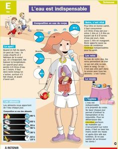 Educational infographic : L'eau et notre organisme Ap French, French Class, French Lessons, Learn French, French Teaching Resources, Teaching French, French Body Parts, Brain Gym, French Teacher