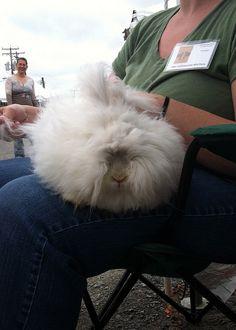 Bunny at Maryland Sheep and Wool