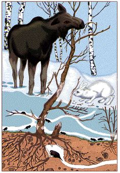 Science And Nature, Pet Birds, Moose Art, Environment, Teaching, Education, Animals, Animales, Animaux