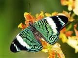 Image detail for -Rainforest Butterfly Wallpaper Most Beautiful Butterfly, Beautiful Flowers Pictures, Beautiful Bugs, Flowers Wallpaper, Butterfly Wallpaper, Wallpaper Pc, Beautiful Wallpaper, Nature Wallpaper, Wallpaper Backgrounds