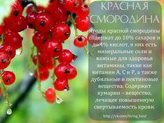 СИЛА ФРУКТОВ И ОВОЩЕЙ | 44 фотографии | ВКонтакте