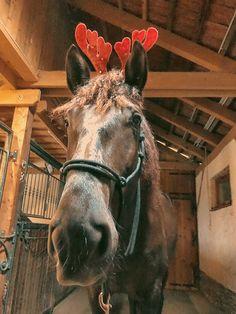 Horses, Animals, Animais, Animales, Animaux, Horse, Animal