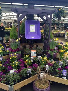 Early spring colour at fairways garden centre lowe's garden center, garden center displays, garden Lowe's Garden Center, Garden Center Displays, Garden Nursery, Plant Nursery, The Colour Of Spring, Spring Colors, Agriculture Projects, Grow Tent, Garden Shop