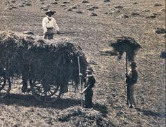 1907 Fernvale Farm Hay
