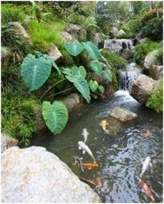 Koi pond lights koi landscape lighting lawn care for Do it yourself koi pond