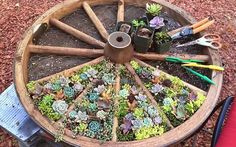 Looking for planter ideas for your succulent plants? Check out these unique, inexpensive ideas that you can easily create for your home.