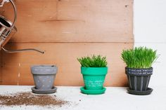 Wheat Grass In Painted Pots | Oh Happy Day! I know this is a craft tutorial but..This is a Great idea for your juicers! Keep it in your Kitchen, clip, & juice!