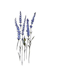 This listing is for one 4x6 print of my original marker illustration, Lavender. Reminiscent of old-school botanical illustrations, this design is
