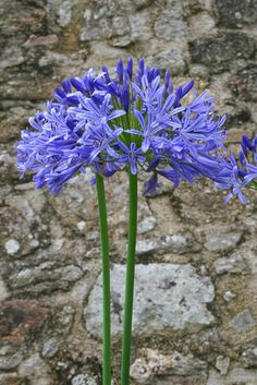 Blue Garden, Lilac Flowers, Fauna, Early Spring, Harvest, Bloom, Nature, Plants, Inspiration