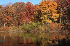 Sterling Pond, Morton Arboretum, Lisle, Illinois.