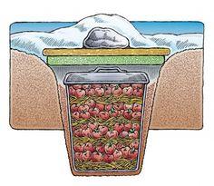 DIY Garbage Can Root Cellar #homesteading #rootcellar #gardening