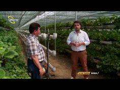 (2) % 100 Tarım-Topraksız Çilek Yetiştiriciliği - YouTube