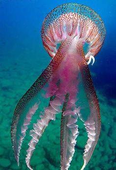 Beautiful jelly