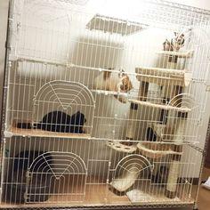 {911BCDA7-5CFE-47F9-9ED0-9CA162AB68E9:01} Bird Cage Design, Animal Room, Pet Furniture, Cat Life, Home Appliances, Pet Rooms, House, Gatos, House Appliances