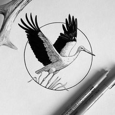 No automatic alt text available. Crane Drawing, Crane Tattoo, Desenho Tattoo, Amanda, Piercings, Bird Illustration, Tattoo Sketches, Sketch Drawing, Bird Drawings