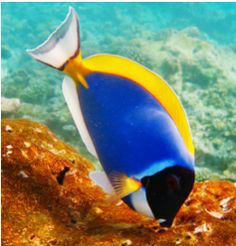 Fish Quiz - How Much Trivia Do You Know?
