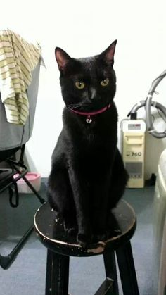 Such a handsome baby! Black Cats Bring Good Luck