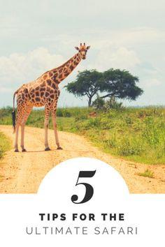 Guide to Safari in Uganda | African Safari | Uganda | Sustainable Travel | Ultimate Safari | Girl's Guide to Safari | Wildlife Travel | Uganda | Africa | African Travel | Bucket List Vacations | Top Safari Travel Tips
