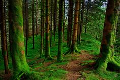 https://flic.kr/p/LzkSnA | Moss carpet | My first attemt at a HDR photo from one…
