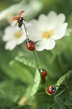 Lady Bug, lady bug, fly away home.