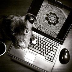 "192 Likes, 8 Comments - Zareen Taj Hidhayath (@zareensart) on Instagram: ""Black ❤ . #art #artist #puppylove #black #blacklove #mandala #mandalaart #mandalaartist…"""